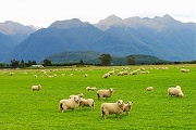 CLICK FOR NEW ZEALAND